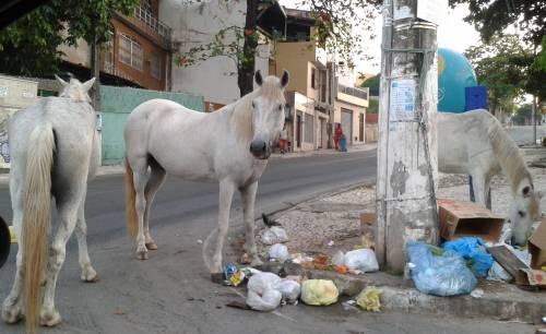 cavalos-em-itapua