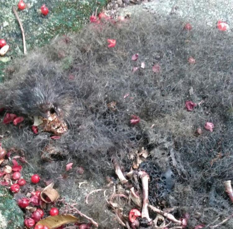 Restos mortais do animal encontrado no quintal da moradora
